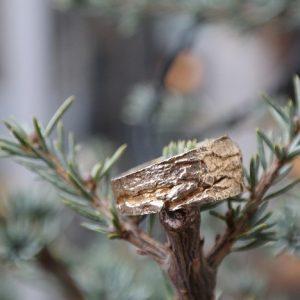 guld, sølv, ring, æbletræ